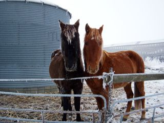 Horse frost_1